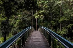 Bridge - Echoes of Elul